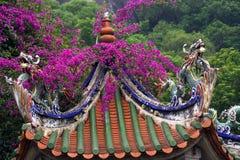 Het Dak China van bougainvillea Stock Afbeeldingen