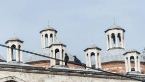 Het dak en de architectuur van de ottomanestijl met vogels in voorgrond, Istanboel, Turkije Stock Afbeelding