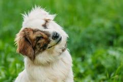 Het dakloze blinde puppy smilling Stock Foto