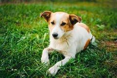 Het dakloze hondpuppy ligt op gras en bekijkt droevig camera royalty-vrije stock foto