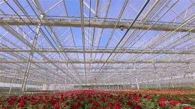 Het daksluiting van de tijdtijdspanne in de serre, het proces om het glasdak in een grote moderne serre te sluiten stock footage