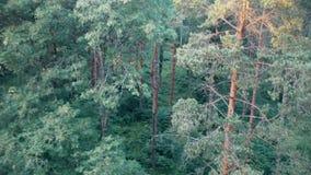 Het dalen in het bos stock videobeelden