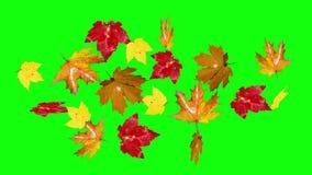 Het dalende groene scherm van de herfstbladeren stock footage