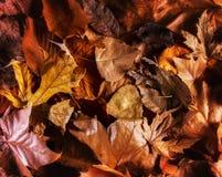 het dalingsbeeld van de grond wanneer de bladeren kleuren draaien stemde met een retro uitstekend effect van de instagramfilter Royalty-vrije Stock Afbeelding
