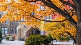 Het dalingsseizoen op de Universiteit van de herfsthokkaido Stock Afbeelding