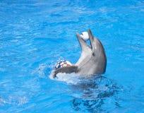 Het dansen dolfijn Stock Foto's