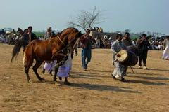Het dansen Paard Royalty-vrije Stock Afbeeldingen
