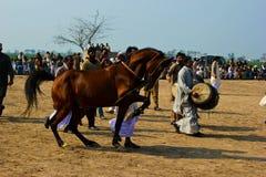 Het dansen Paard Royalty-vrije Stock Foto's