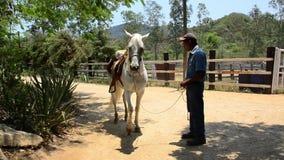Het dansen Paard - Puerto Vallarta stock video