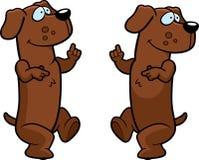 Het Dansen van de hond Stock Foto