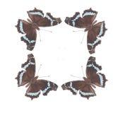Het dansen van de vlinder no.3 Royalty-vrije Stock Foto's