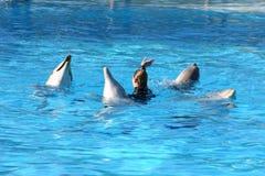 Het dansen van dolfijnen Stock Foto's