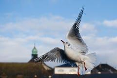 Het dansen vogel in de stad Stock Fotografie
