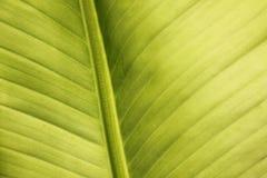 Het de abstracte textuur en patroon van het banaanblad Stock Foto's