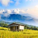 Het de bamboehut en padieveld met rijststoppelveld gingen na harvestin weg Royalty-vrije Stock Foto's