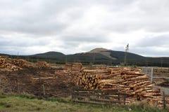 Het de bosbouwwerk van Campsieheuvels Stock Foto