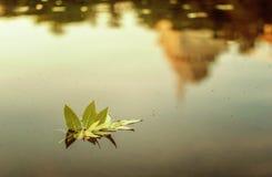 Het de herfstblad die in een vijver drijven Royalty-vrije Stock Afbeeldingen