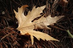 Het de herfstblad viel in het bos Royalty-vrije Stock Foto's