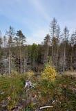 In het de herfstbos Stock Afbeeldingen