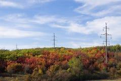 Het de herfstbos Stock Foto's