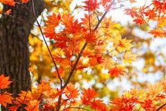 Het de herfstbos, al gebladerte is geschilderd met gouden kleur in het midden van de bosweg Royalty-vrije Stock Foto's