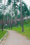 Het de herfstbos brengt onder Royalty-vrije Stock Foto