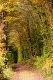 Het de herfstbos met mooi goden gebladertevoetpad door de bomen royalty-vrije stock fotografie
