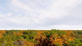 Het de herfstbos vele 3D bomen geeft terug Royalty-vrije Stock Fotografie