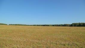 Het de herfstgebied is een oogst op een Zonnige dag stock videobeelden
