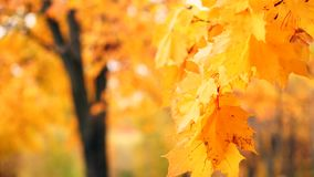 Het de herfstgebladerte stock footage
