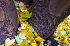 Het de herfstgebladerte verborg de boom Stock Foto