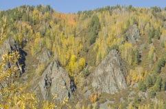 Het de herfstlandschap met helder kleurenbos op de Bank van de helling in de herfst gaat weg royalty-vrije stock afbeeldingen