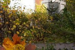 Het de herfstpark, boeket van rozen van gevallen esdoornbladeren dat worden gemaakt ligt Royalty-vrije Stock Afbeeldingen