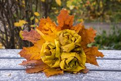 Het de herfstpark, boeket van rozen van gevallen esdoornbladeren dat worden gemaakt ligt Stock Foto