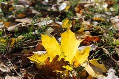 In het de herfstpark is er een geel blad stock foto's