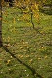 Het de herfstpark, op de esdoornbladeren van gevallen op groen gras ligt h Royalty-vrije Stock Afbeelding