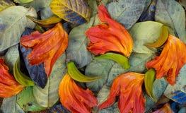 Het de herfstseizoen verlaat de kleuren van aard in bladeren Stock Foto's