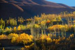 Het de herfstzonlicht stak kleurrijke bomen en berg in Phander-vallei aan pakistan royalty-vrije stock afbeelding