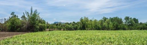 Het de landbouwlandschap van landbouwbedrijfkorrels Royalty-vrije Stock Afbeeldingen