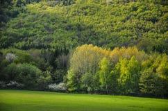 Het de lentebos met alle kleurentonen van groene, speciale lichte Foto van wilde aard, bomen, doorbladert en witte bloemen in blo Royalty-vrije Stock Foto's