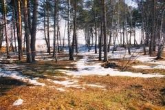 Het de lentebos met zon glanst royalty-vrije stock afbeeldingen