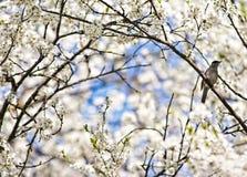 Het de lenteleven Stock Foto's