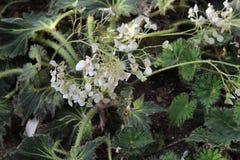 Het de mooie bloem van ` s van Botanische Tuin van Peter Groot Stock Afbeeldingen