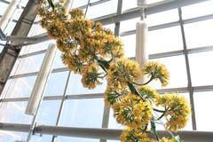 Het de mooie bloem van ` s van Botanische Tuin van Peter Groot Royalty-vrije Stock Fotografie