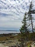 Het de de pijnboombomen, rotsen en zeewier op kustlijn van oceaan in centraal Maine met unieke wolk behandelen en blauwe hemel stock afbeeldingen