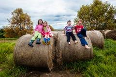 Het de Pretgras van kinderenjonge geitjes verpakt Landbouwbedrijf in balen Stock Afbeelding