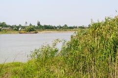 Het de rivier en riet van Yangtze stock foto