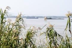 Het de rivier en riet van Yangtze royalty-vrije stock foto's