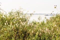 Het de rivier en riet van Yangtze royalty-vrije stock fotografie