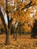 Het de schoonheidspark en herfst Royalty-vrije Stock Foto